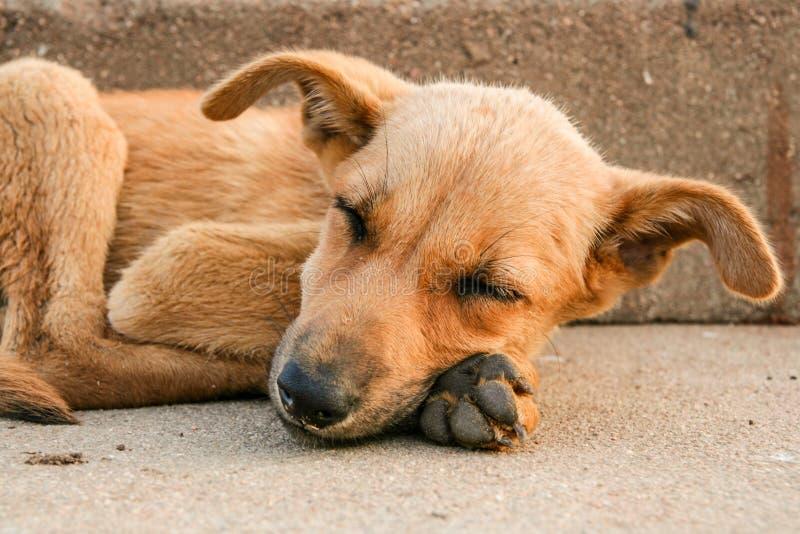 Ungt sova för tillfällig hund arkivfoto