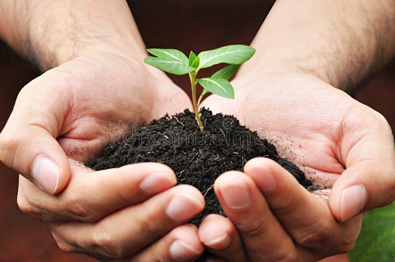 Ungt träd för handinnehavgräsplan med jord arkivfoton