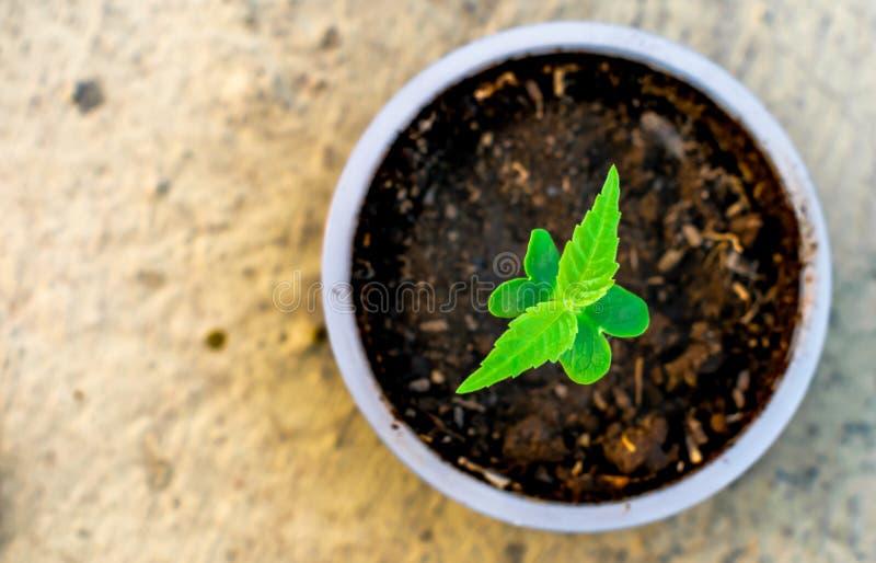 Ungt träd som växer i en omsorg för jord för natur för koppjordgräsplan royaltyfri bild