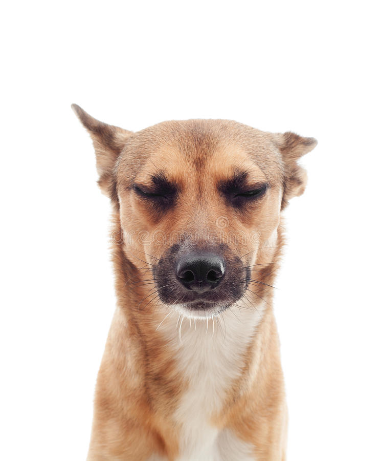 unhappy dogs stock image