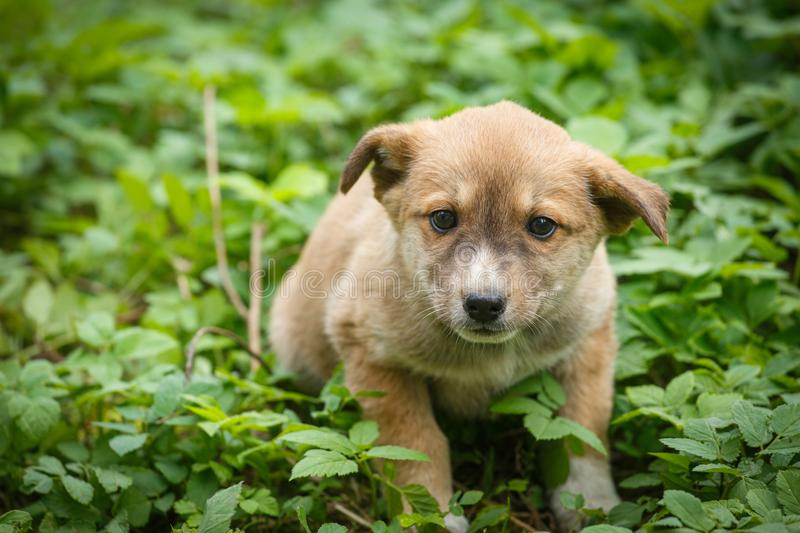 Unhappy homeless dog that lives underground. Dog in garden stock photography