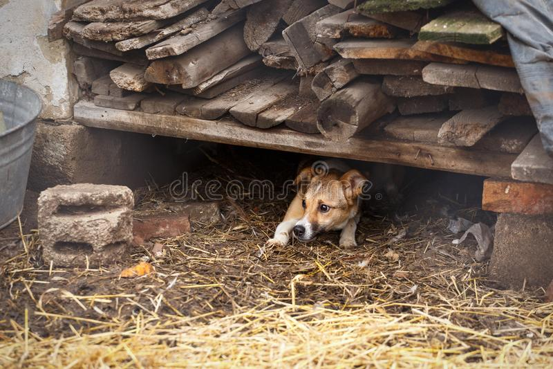 Unhappy homeless dog royalty free stock image