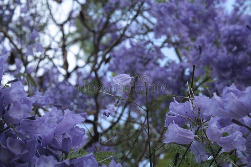 Unicidade nas flores imagem de stock royalty free