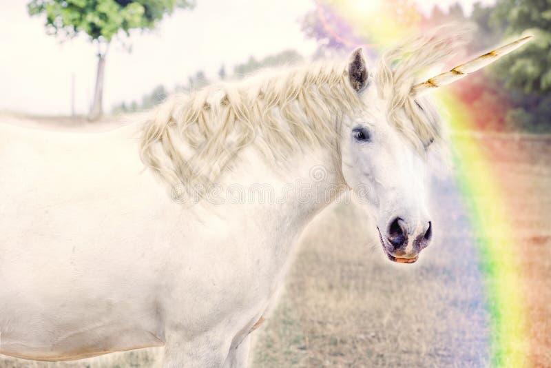 unicorn imagen de archivo libre de regalías