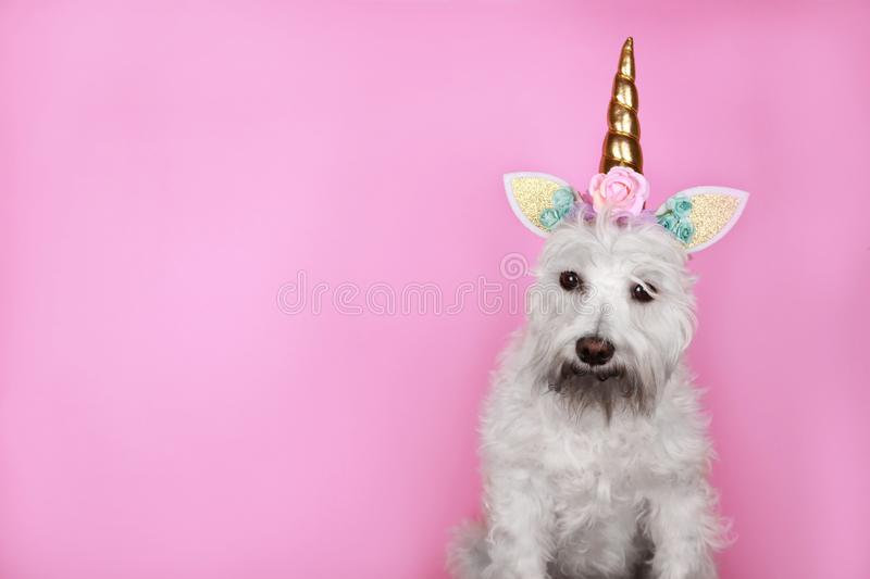 Unicorn little white dog on pink background with copy space stock image