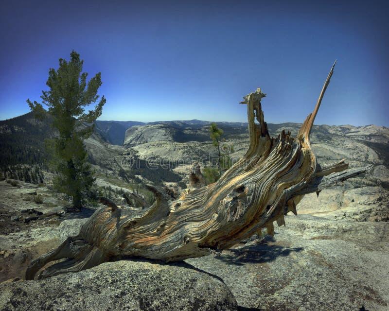 Unicorn Log photographie stock libre de droits