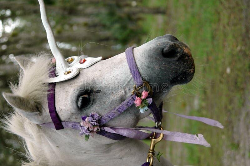 Unicorn pony. A pony dressed up as a unicorn royalty free stock images