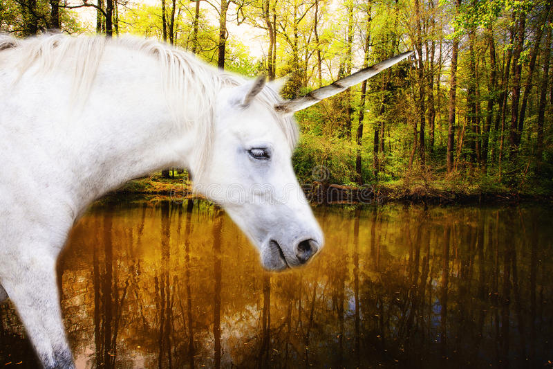 Unicorn. Ready for drinking natural water from deep forest royalty free stock photos
