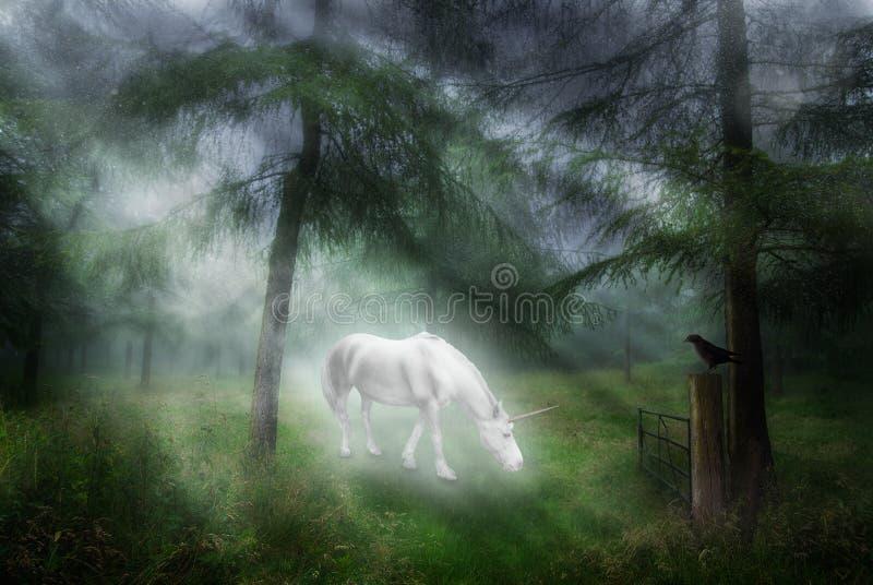 Unicorno in una foresta fotografia stock libera da diritti