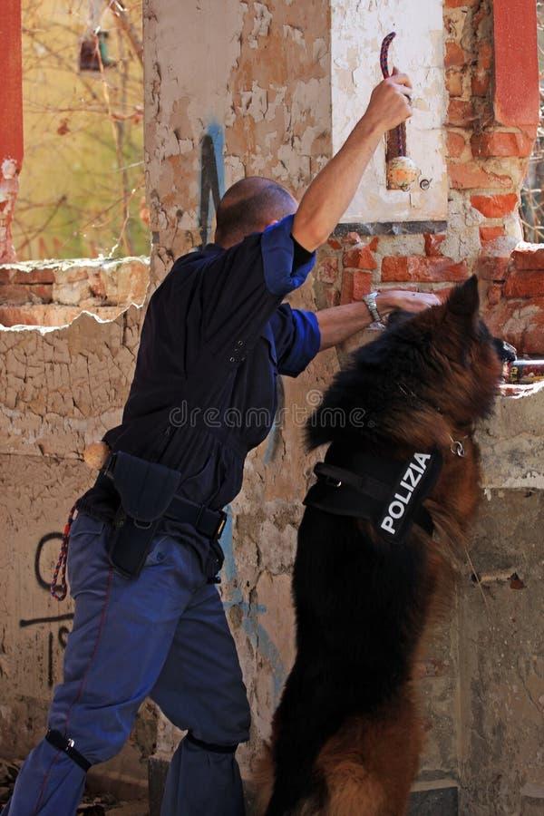 Unidade canina de polícia imagens de stock
