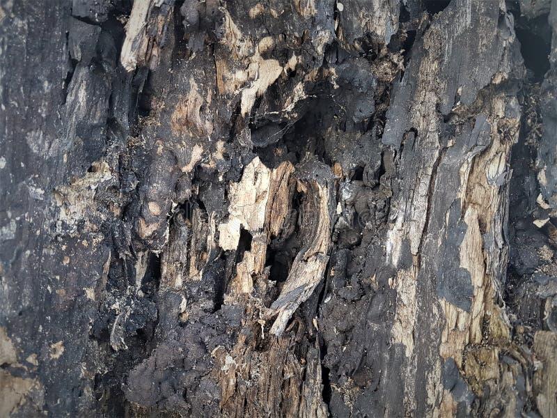 Unidades da textura do córtice e do corte de uma árvore abatida imagem de stock royalty free