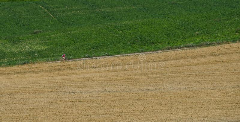 An unidentifiable man cycling up a country road stock image