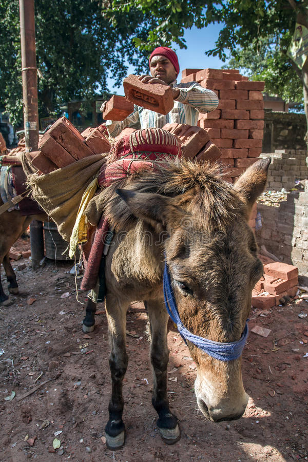 Unidentificate indian worker load a donkey with bricks stock image