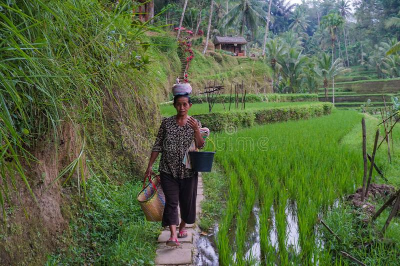 An unidentified Balinese rice farmer poses during a morning`s work near Ubud, Bali, Indonesia, 09.08.2018 royalty free stock images