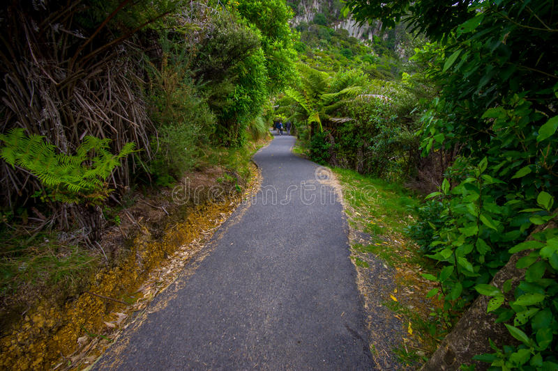An unidentified people walking in a asphalted roar inside of the forest in cathedral Cove marine reserve on the. Coromandel Peninsula in New Zealand royalty free stock photography