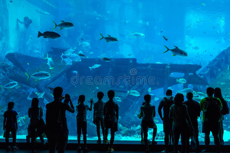 Unidentified people watch fish in the Singapore Aquarium in Singapore. Singapore - June 26, 2016: Unidentified people watch fish in the Singapore Aquarium in stock photo