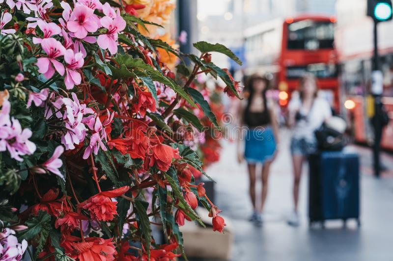 Unidentified tourists walking on a street in London, UK, past the blossoming flowers. Unidentified tourists with luggage walking on a street in London, UK, past stock photo