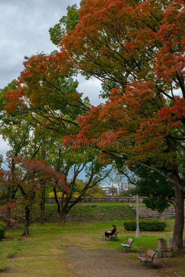 Unidentified woman reads a book under trees during season colours at Osaka Castle Park in Osaka, Japan royalty free stock images