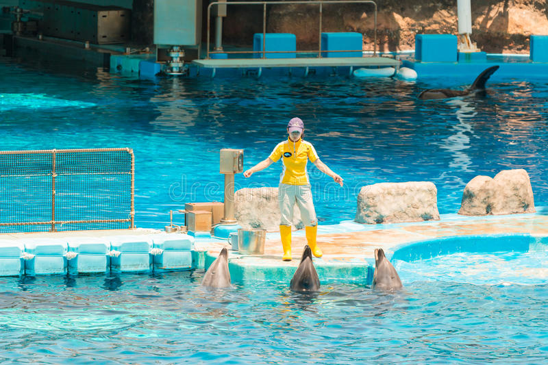 An unidentified woman trainer is showing dolphins. royalty free stock photos