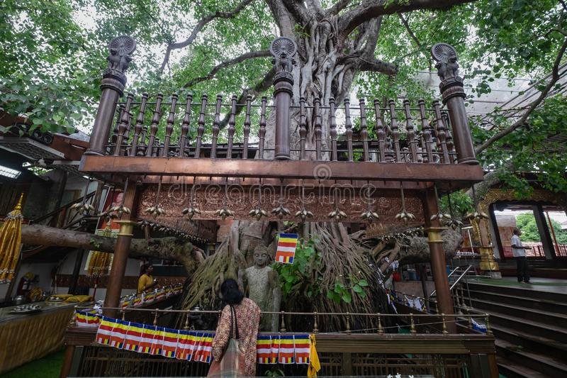 """Unidentified women praying on a. COLOMBO, SRI LANKA - AUGUST 11, 2019: Unidentified women praying on a`Bodhi Tree"""". The large and very old sacred fig tree royalty free stock photos"""