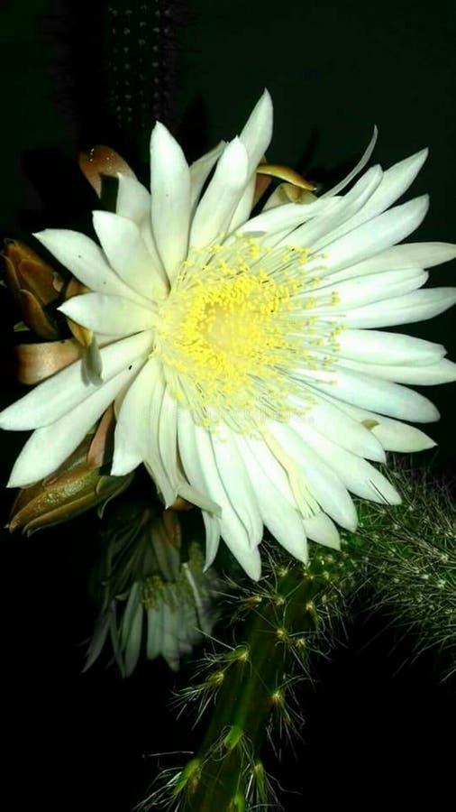 Unieke bloem in aard stock fotografie
