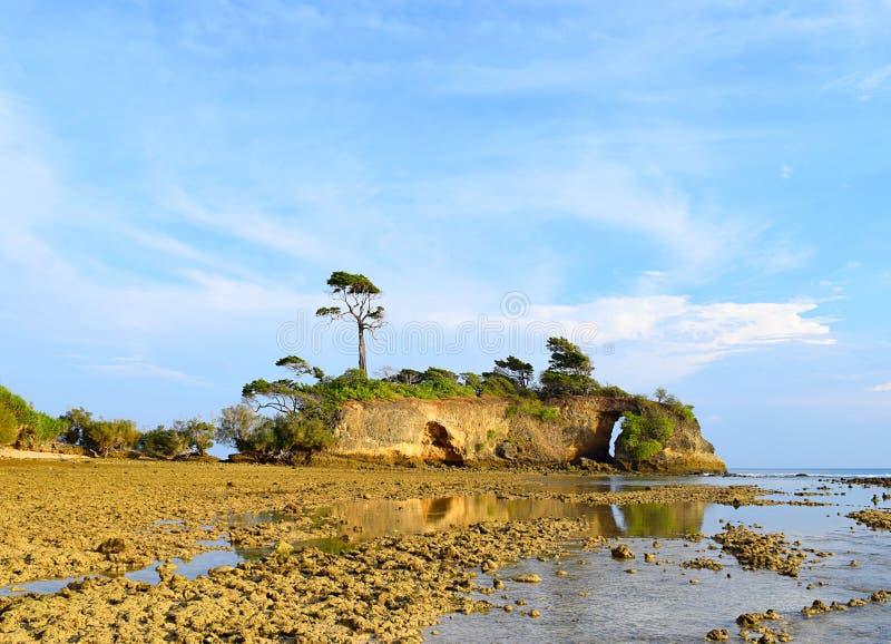 Unieke Lange Boom bovenop Heuvel bij Eiland op zee Kust tegen Blauwe Hemel - Landschap in Neil Island, Andaman Nicobar, India royalty-vrije stock afbeelding