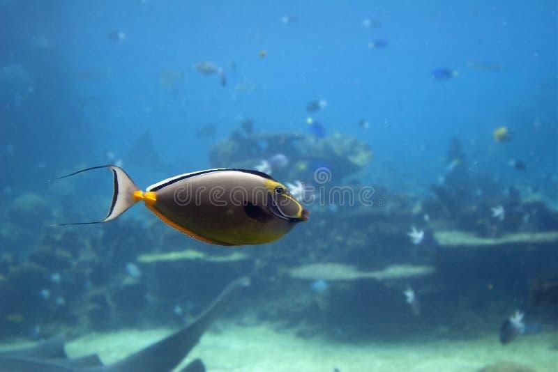 Unifish stock foto's
