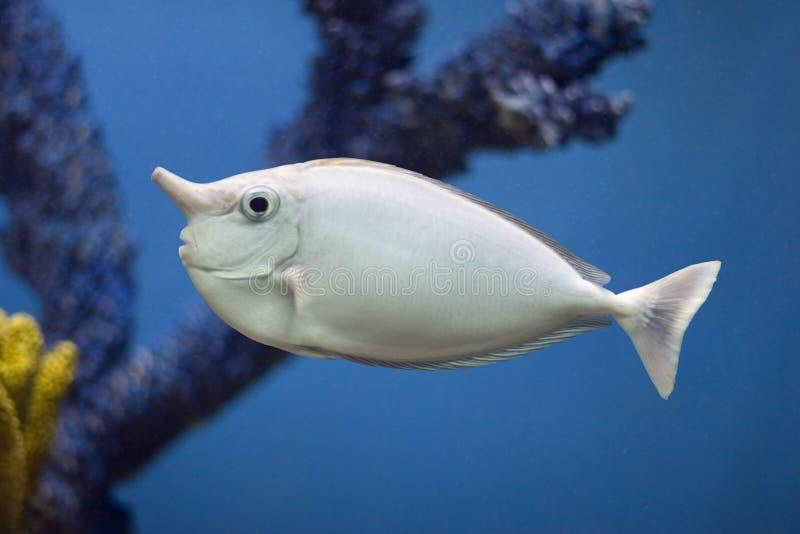 Unifish stock foto