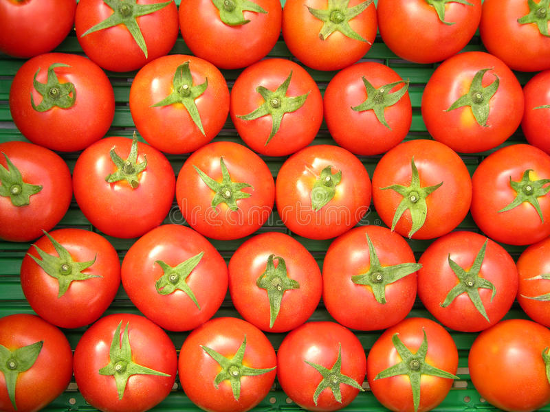 Uniformity. Uniform tomatoes with equal size and shape stock photos