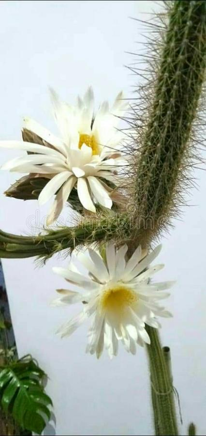 Unik blomma i natur royaltyfri foto