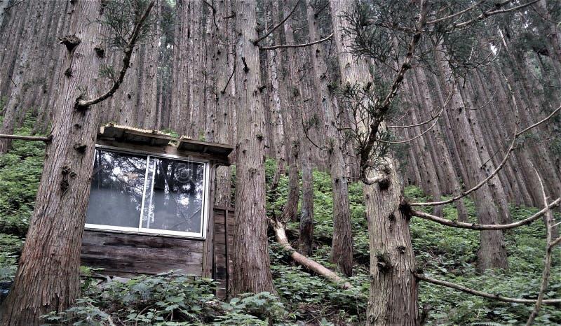 Unik sikt av den Nagano skogen i Japan arkivbild