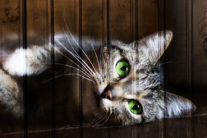 Unik textur, träbakgrund med gröna ögon för katt arkivbilder