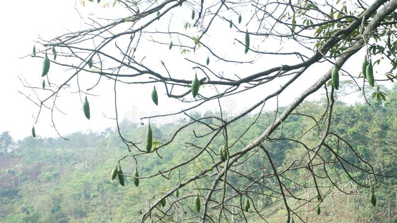 Unik växt fotografering för bildbyråer