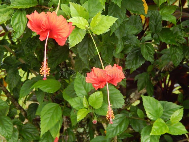 Unika växter på den stora ön av Hawaii royaltyfria foton