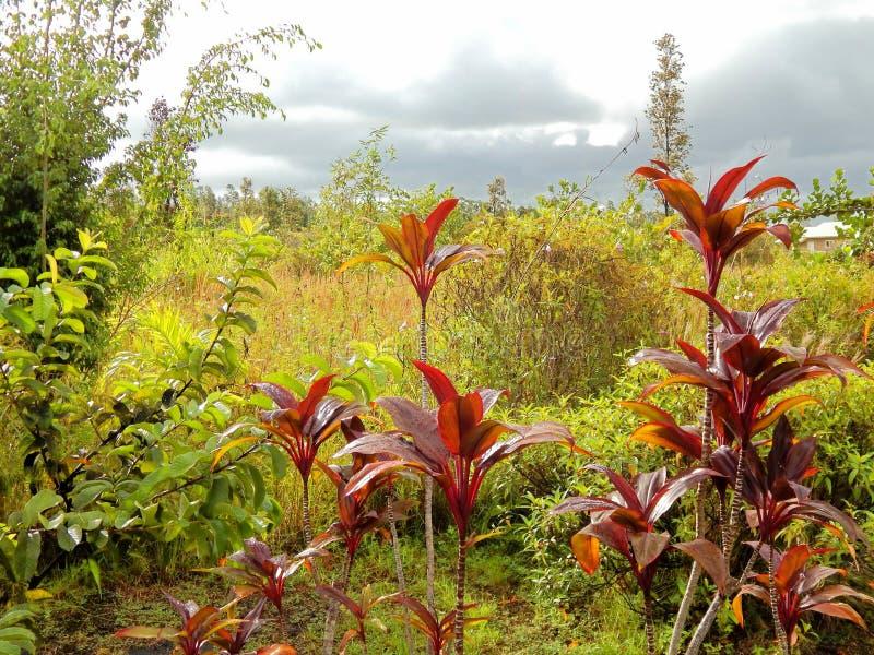Unika växter på den stora ön av Hawaii fotografering för bildbyråer