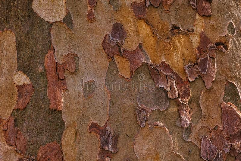 Unikalna drewniana tekstura, barwiąca barkentyna obrazy stock