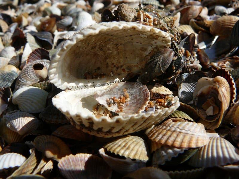 Unikalna natura morze Azov obrazy stock