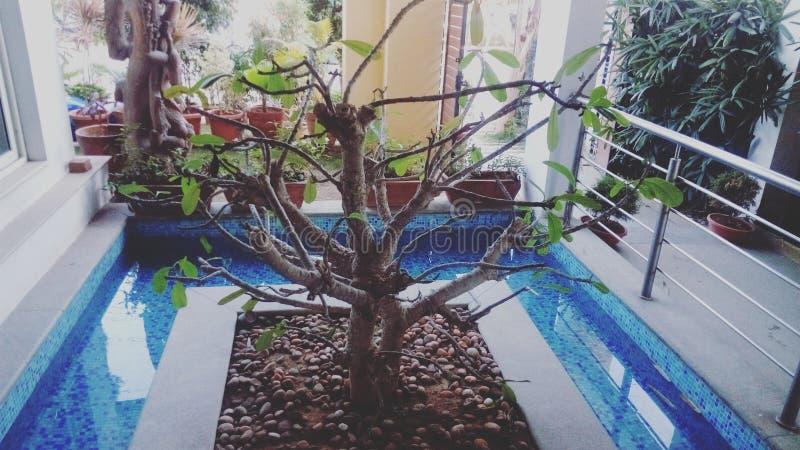 Unikalne rośliny obrazy royalty free