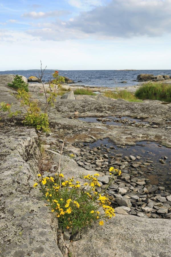 unikalni natura brzegowi szwedzi obraz royalty free
