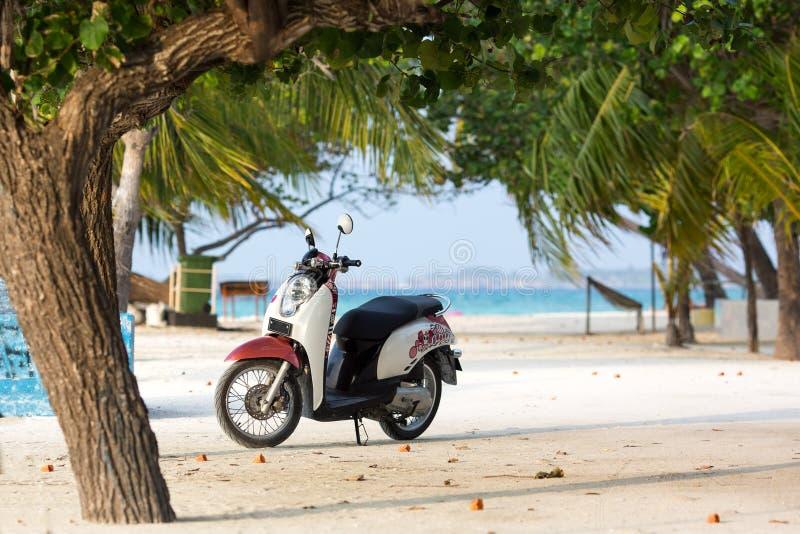 Unikalni projekt hulajnoga stojaki na plaży pod drzewkiem palmowym zdjęcie royalty free