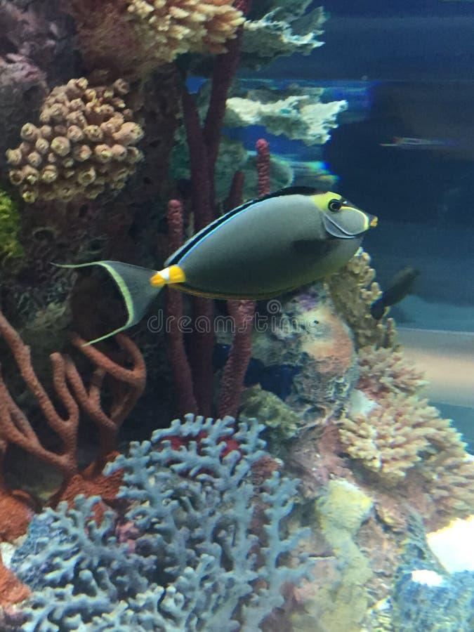 unikalny ryb obraz stock