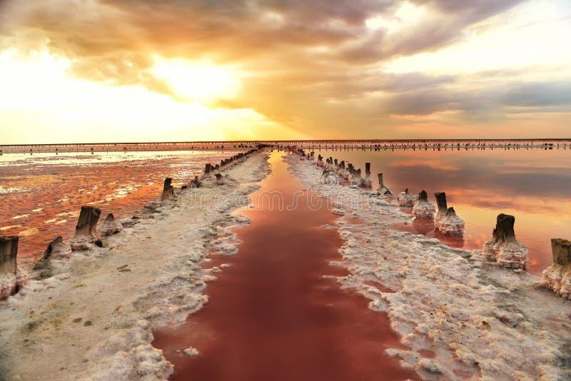 Unikt salta sjön med rosa vatten och salta på solnedgången Rader av träkolonner som täckas med, saltar kristaller arkivfoton