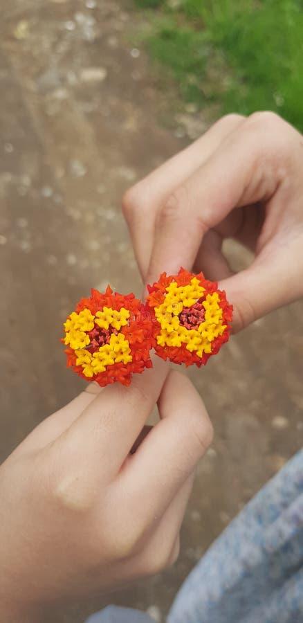 Union de flores arkivfoton