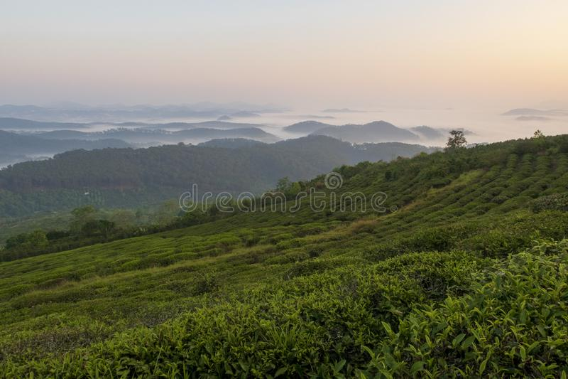 Unique background with fresh green tea leaves and tea hill part 9. Unique background with fresh green tea leaves and tea hill. Beautiful original photo used for royalty free stock photography