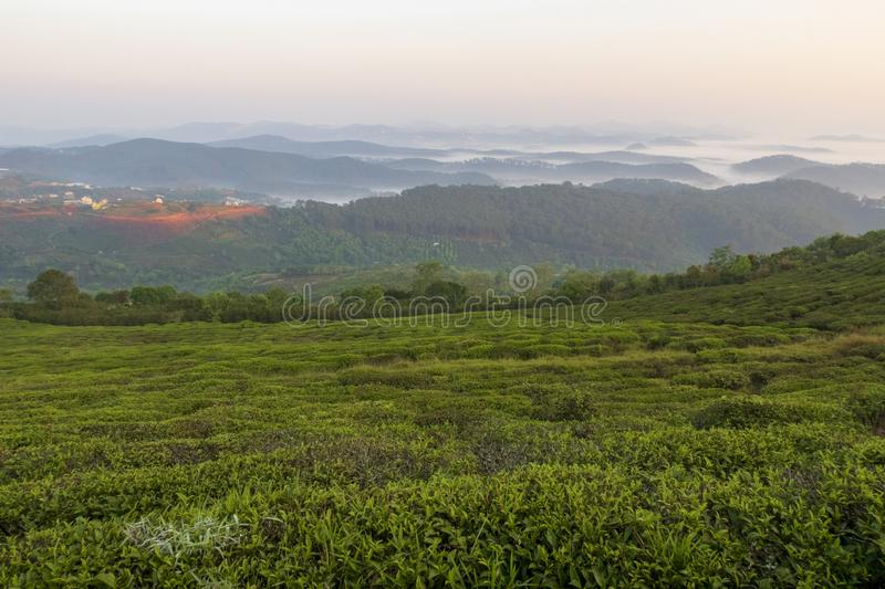 Unique background with fresh green tea leaves and tea hill part 7. Unique background with fresh green tea leaves and tea hill. Beautiful original photo used for stock photos