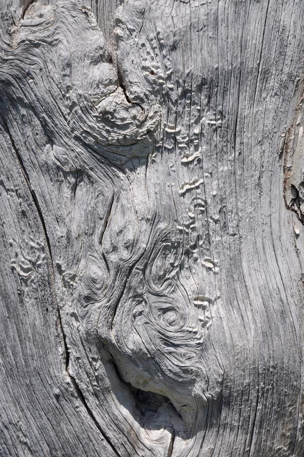 Free Unique Bark Texture: Abstract Tree Trunk Stock Photo - 61737470