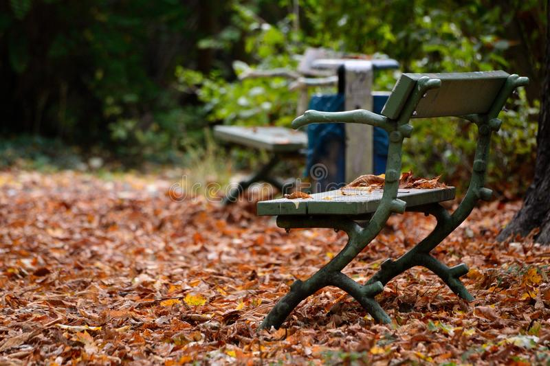 Unique bench in the park. Autumn time with brown leaves foliage stock image