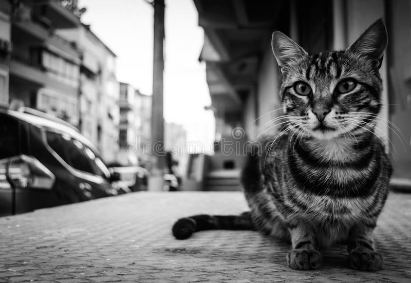 Unique Cat Close Up Portrait. Unique and highly detailed close up portrait of a beautiful alley cat with black and white colors in a summer evening stock image