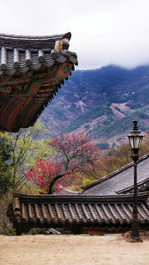 A unique colorful Korean temple. A unique colorful Korean temple with the beautiful background of red flowers, green trees and mountain view stock images