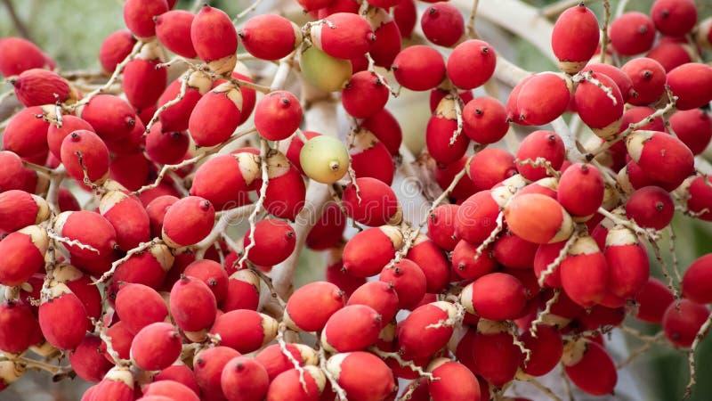 Unique fruit, palm fruit like egg, for easter idea concept design. Beautiful fruit stock images